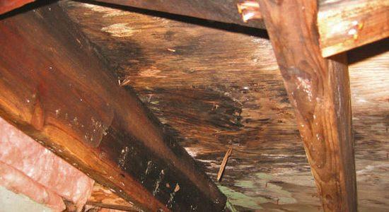 La humedad excesiva pudre y destruye la madera en estructuras y objetos de valor – Primera parte