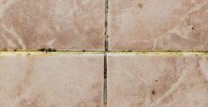 deshumidificador industrial para paredes